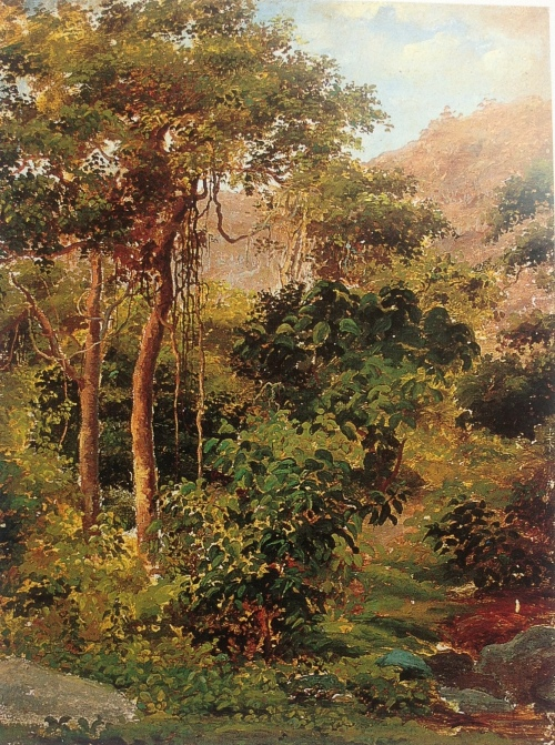 Tropical Forest, Galipan c. 1854  PDR 6 Private collection